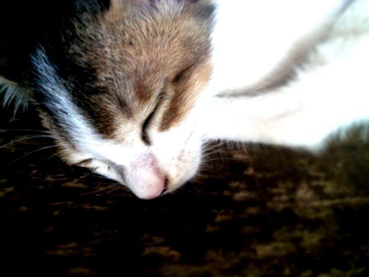 Sleeping tom Pet Photography  Relaxing