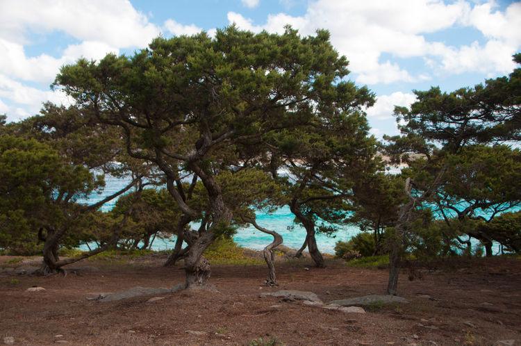 Photographs shot in Sardinia, at La Pelosa beach Holiday Beach Blue Cliff Rocks Sardinia Sea Sky Tide Water Waves