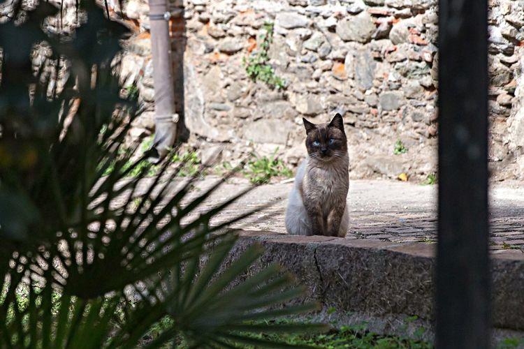 Cat Eye Em Nature Lover Animal Taking Photos