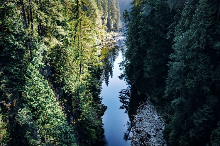 Vancouver Canada Capilano Canada Tree Beauty In Nature Forest Tranquility Scenics - Nature Tranquil Scene Growth No People Land Green Color Nature Water Idyllic High Angle View Outdoors WoodLand