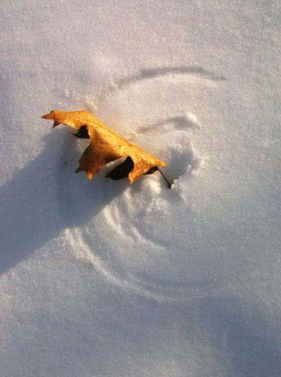 High angle view of fallen dry leaf on snow