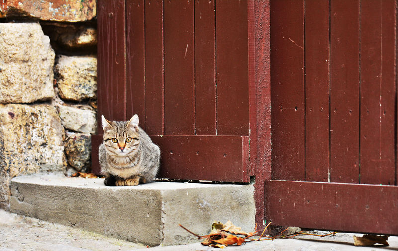 Close-Up Of Cat On Steps