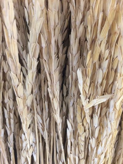Full Frame Backgrounds Close-up No People Cereal Plant Pattern Oats - Food Food Crop  Beige Large Group Of Objects Plant Food And Drink Indoors  Abundance Nature Day Agriculture Still Life Textured  Porridge