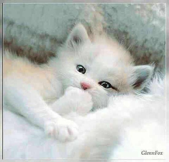 Im Born In Phillipine!! Hello World Cat Good Morning✌♥