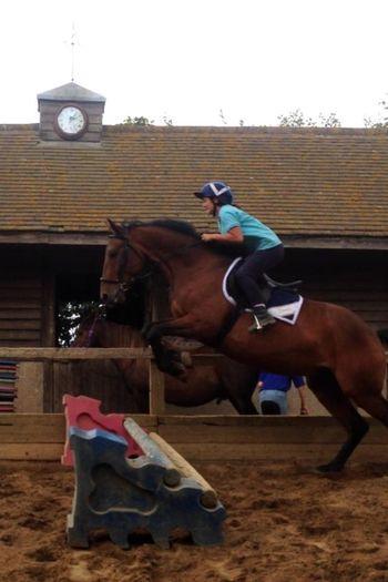 Amazing Art Beautiful Animal Companionship Horse Jumping Photography Riding Stunning
