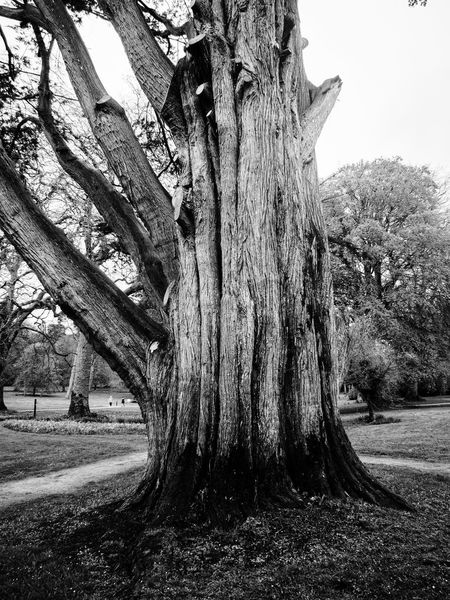 Beauty In Nature Black & White Black And White Branch Curraghchase Day Growth Landscape Nature No People Outdoors Scenics Sky Tranquility Tree Tree Trunk Dodge & Burn