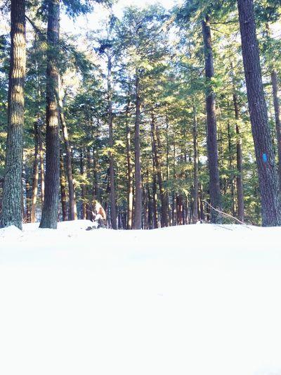Hiking Michigan Snow Trees Life