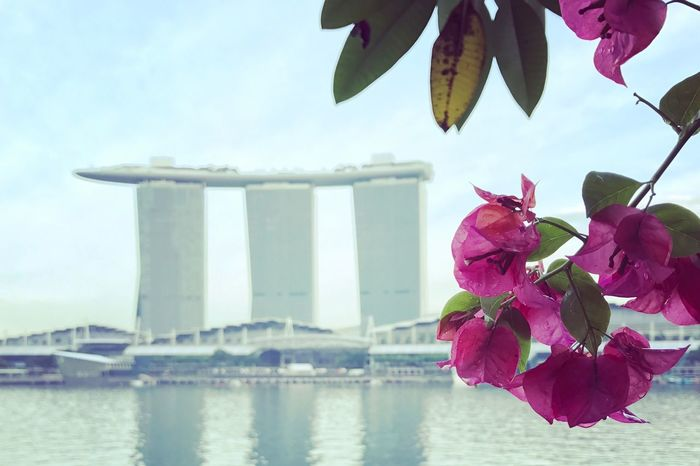 Marina Bay Sands Bay Sands Singapore Flower Water Sky Day Nature Outdoors Beauty In Nature Focus On Foreground Architecture No People Freshness