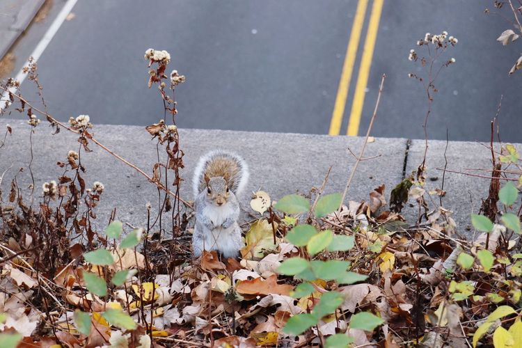 Day Outdoors No People Leaf Squirrel Eichhörnchen Road Animal Themes Mammal Nature Close-up