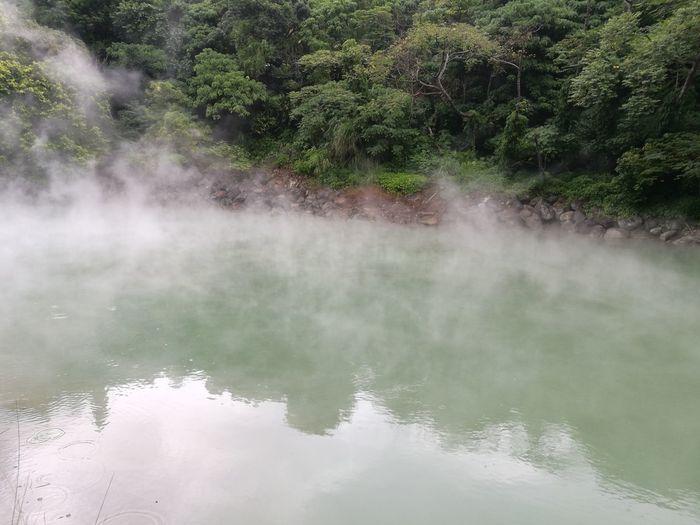 Water Tree Hot