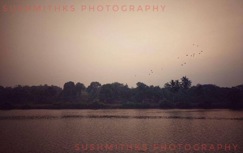 MotoZPlay Sushmithks Bhatkal Shirali EveningPhotography Bird Flying Animal Wildlife Flock Of Birds Sunset Animals In The Wild Nature No People Scenics Sky Large Group Of Animals Flamingo Outdoors Beauty In Nature Water Animal Themes Day