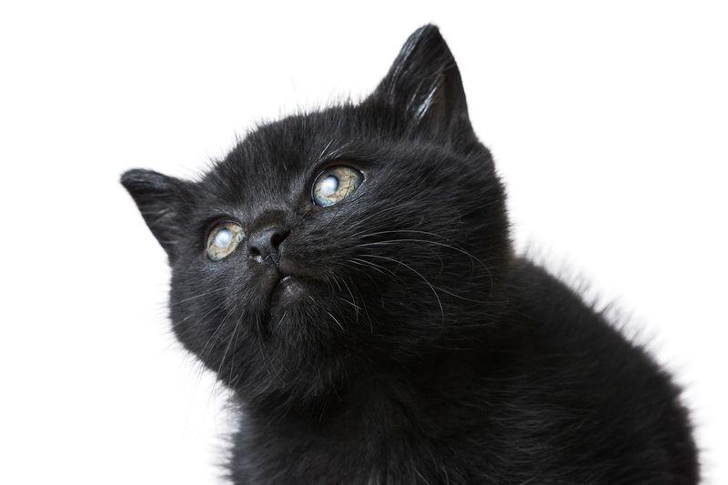 Black cute