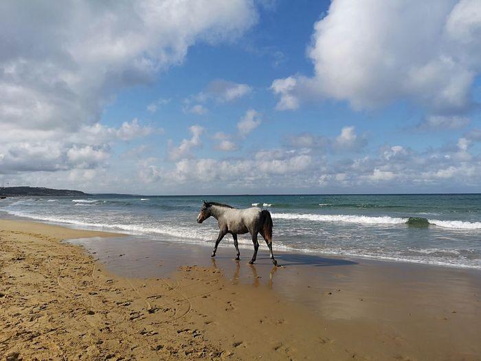 Horse Sea Horse