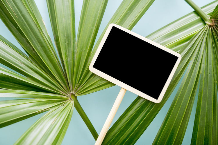 Green Screen Backgrounds Black Blackandwhite Blue Close-up Day Flat Lay Green Color Leaf Minimal Nature No People Outdoors Palm Leaf Palm Tree Top View Tree Wood - Material