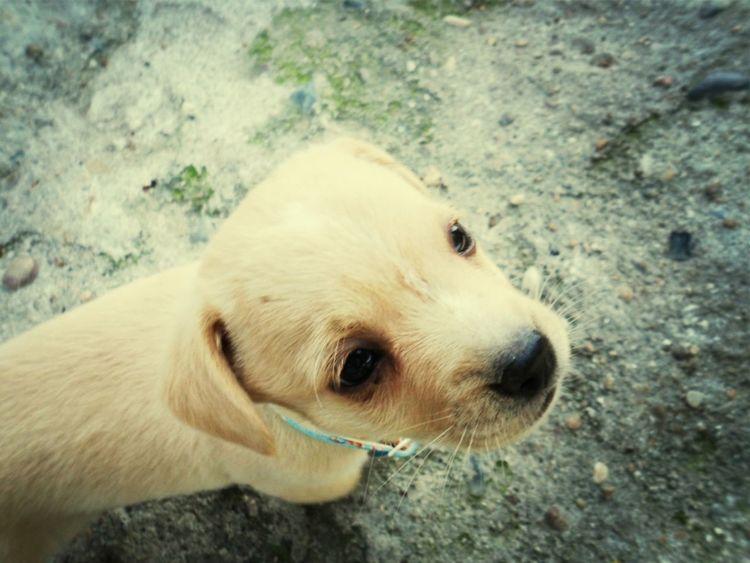 Dog Cãozinho Cute