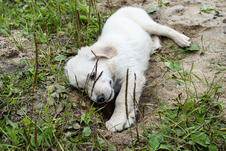 High angle view of white animal on field