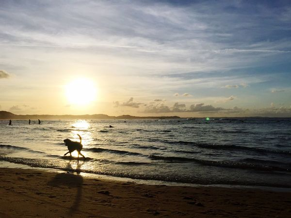 Dog Sea Water Sky Beach Sunset Land Scenics - Nature Beauty In Nature Sand Horizon Over Water Horizon Real People Cloud - Sky Silhouette Domestic Animals Tranquility Nature Tranquil Scene Sun