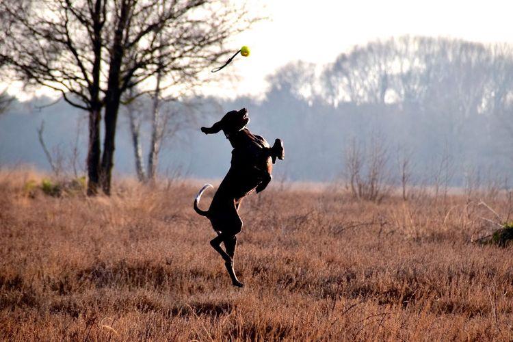 Full length of dog jumping against sky