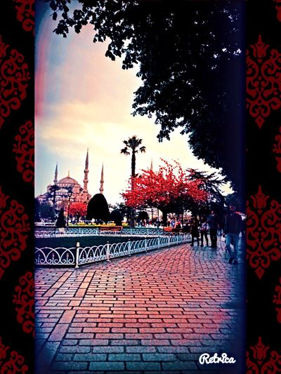 ❤️🌿☘️🌺🌷 Tree Outdoors City Day Sky Architecture Mosque Art Is Everywhere Environment Frame ArtWork Beautiful Field Tranquil Scene Nature City Real People Istanbul