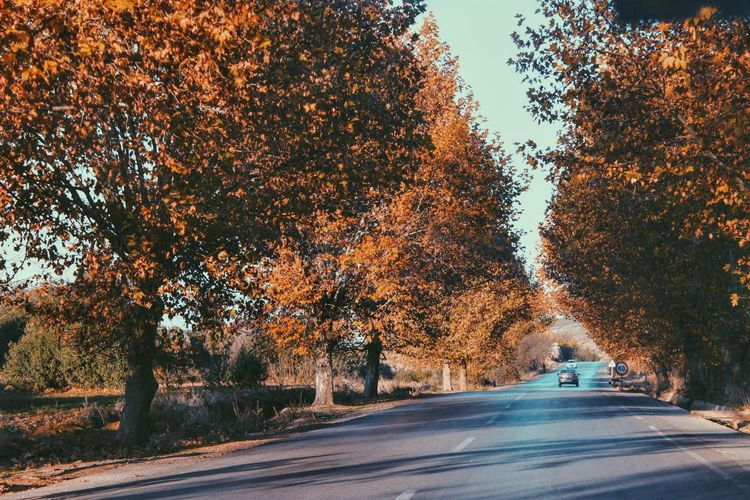 Autumn Beauty In Nature Car Clear Sky Country Road Day Empty Empty Road Growth Lithuania Lithuania Nature Nature Orange Color Outdoors Road Shadow Sunlight Sunny Sunny Day The Way Forward Tree Treelined