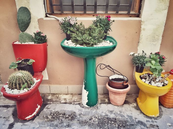 Toilet bowls and washbasin used for planting plants