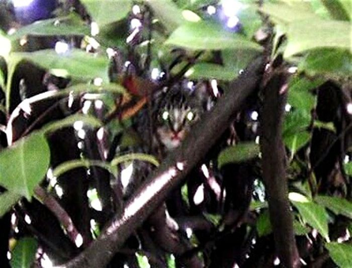 Perfect Match Cat Eyes In Tree! Portland, OR USA TreePorn Hanging Out Taking Photos Cute Pets Kittens Kitten Love My Backyard