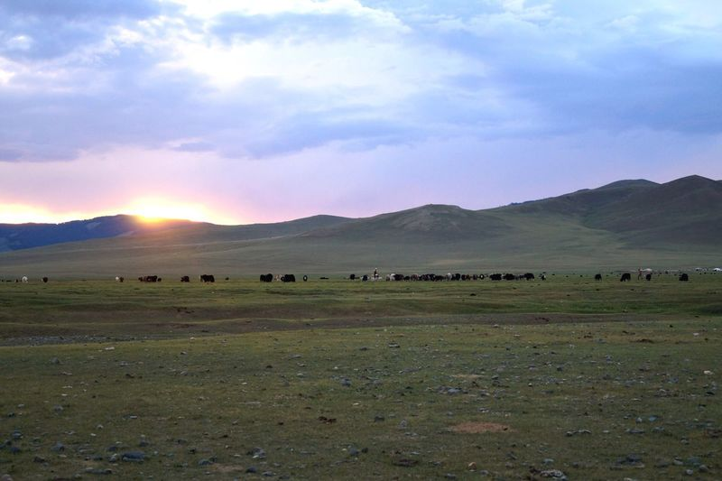 Animal Themes Landscape Large Group Of Animals Sky Field Mammal Cloud - Sky Grass Nature No People Mountain Scenics Beauty In Nature Outdoors Grazing Animals In The Wild Day Domestic Animals