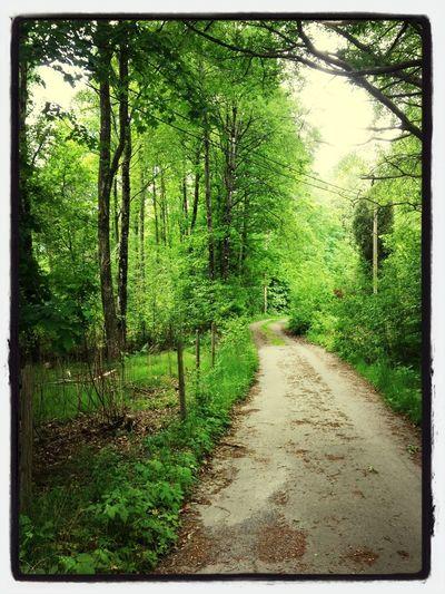 Nature Trees Sweden Hidden Road