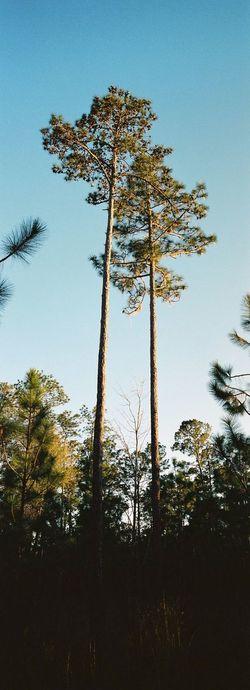 Ocala National Forest, Florida / Hasselblad XPan, Kodak Portra 400 Film