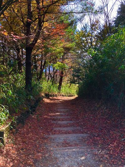 Walking in a deciduous forest Trees Japan Photography Japan 休日 葛城山 落ち葉 秋 山 紅葉 Weekend Getaway Adventure Hiking Trees Forest Fall Leaves Colorful Deciduous Tree Tree Autumn Nature Forest The Way Forward Tranquility Beauty In Nature Be. Ready. EyeEmNewHere