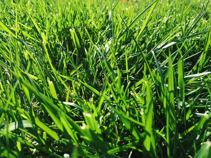 Grass Growth Green Color Nature Full Frame No People Field Backgrounds Plant Day Beauty In Nature Outdoors Freshness Close-up Copy Space