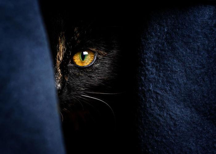 Cat hiding Pets