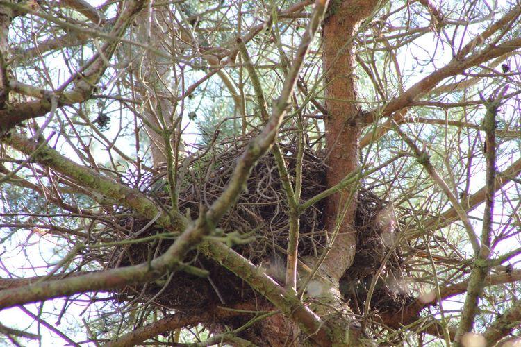 Now that's a nest and a half! Buzzard  Birdsnest Nest Birds Naturelovers Nature Wildlife Photography Wildlife Nature_collection