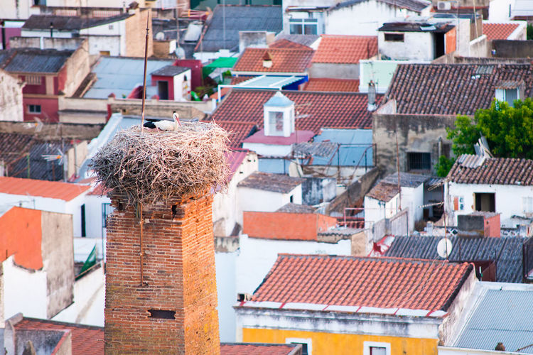 Stork's Nest over the old town city of Badajoz Badajoz Extremadura SPAIN TOWNSCAPE Architecture Bird Building Exterior Built Structure Day High Angle View House Nest Old Outdoors Roof Sky Stork Stork Nest Town