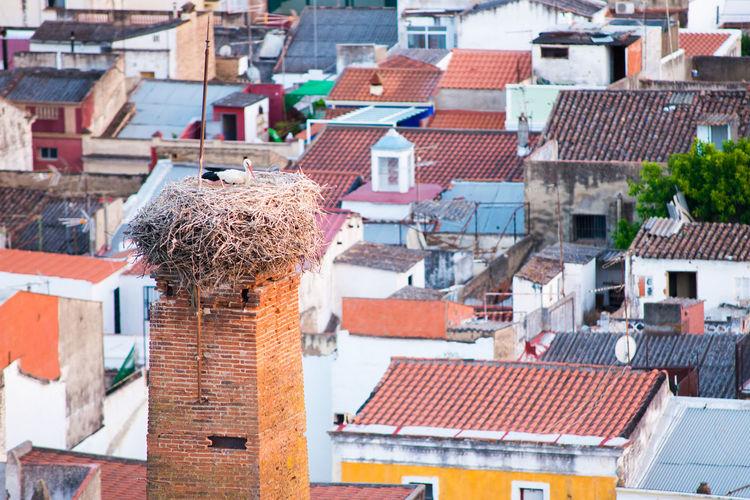 Stork nest in spain