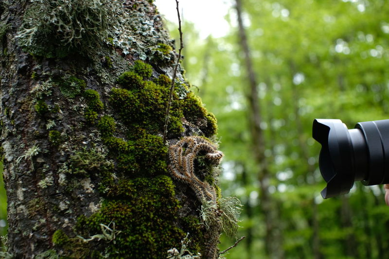 Tree Photography Themes Technology Camera - Photographic Equipment Photographing Digital Single-lens Reflex Camera Close-up Filming Lens - Optical Instrument Photographic Equipment Camera Coin-operated Binoculars Lens - Eye Photographer Photo Shoot Observation Point The Great Outdoors - 2019 EyeEm Awards