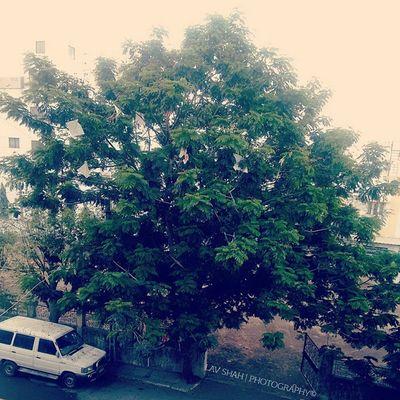 Early Morning Tree Green Sun Rays Instapicha Instaclick Instaedit Instaupload Surat_promotions Suratpride Surat_igers Igsurat Ig_surat Iamsuratcity Ilovesurat 1000things2doinsurat