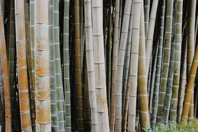 Full frame shot of bamboo in forest