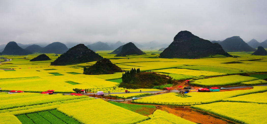 Canola field, rapeseed flower field with the mist in Luoping, China Luoping Rain Rapeseed Field Aerial View Agriculture Beauty In Nature Canola Canola Field Cloud - Sky Day Farm Field Fog Grass Green Color Growth Hill Landscape Mist Mountain Mountain Range Nature No People Outdoors Panoramic Patchwork Landscape Rapeseed Oil Rapeseed Yellow Tadaa Rural Scene Scenics Sky Tourism Tranquil Scene Tranquility Tree Village