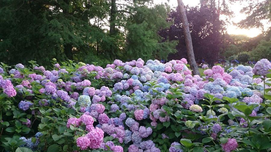 Purple flowers blooming on tree