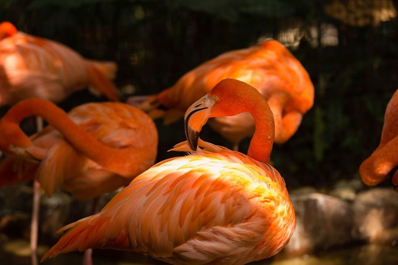 flamingo Flamingo Orange Color Food Focus On Foreground Close-up No People Food And Drink Animals In The Wild Nature Animal Wildlife Animal Themes Animal Sunlight Outdoors
