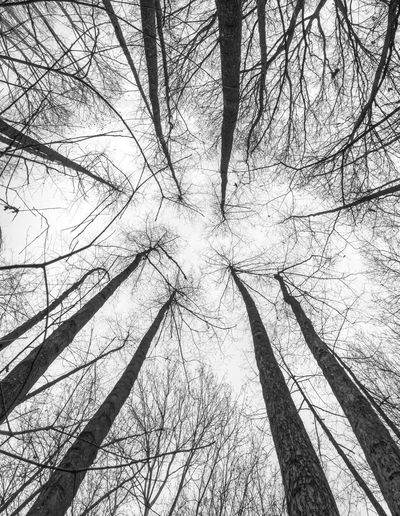 Tree Plant Bare