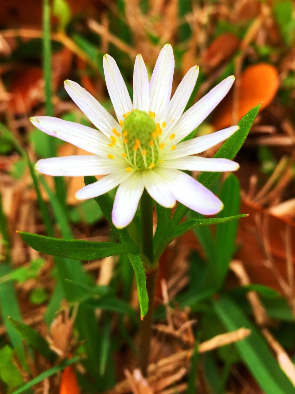 flower, petal, nature, fragility, growth, flower head, freshness, beauty in nature, plant, blooming, close-up, no people, day, outdoors