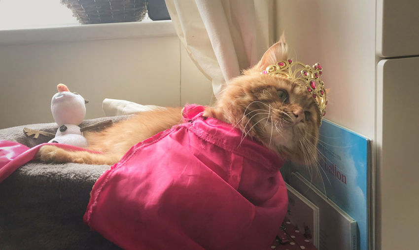 dutch spring in amsterdam Mammal Pets Animal Domestic Animals One Animal Domestic Animal Themes Vertebrate Indoors  No People Feline Cat Domestic Cat Canine Home Interior Dog Window Pet Clothing Relaxation Pink Color Small