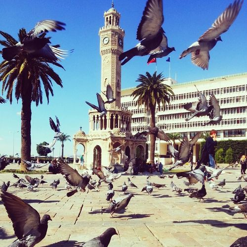 ızmir Clocktowers Instagood Morning Model Turkey Konakclocktowers Photography EyeEm Flower Nice Day