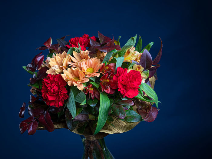 Close-up of multi colored flowers against blue background