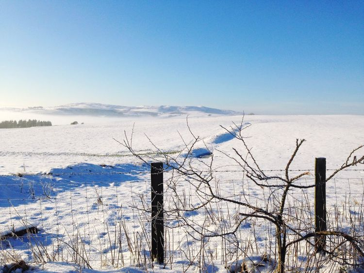 Winter Cold Temperature Snow Blue Weather Nature Clear Sky Day Scenics Beauty In Nature Tranquility Outdoors Tranquil Scene Frozen No People Bare Tree Sky EyeEmNewHere