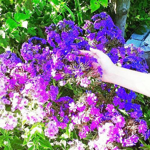Hello, guys😻🙊 Taking Photos Flowers Flowerporn Floxy Nature Purple Hand