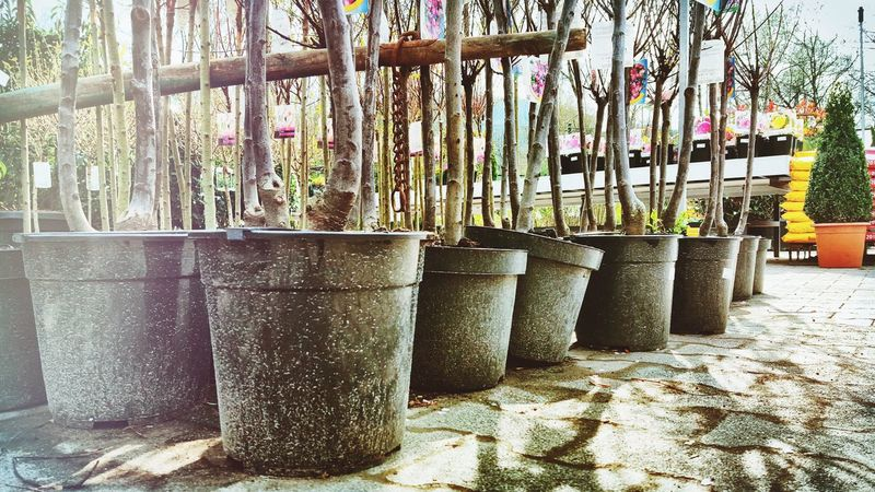 Trees Everything In Its Place Buckets Nature Directly Above No People Flowers Shop Outside From My Point Of View In A Row Tree Trunk Mud Muddy Taking Photos EyeEm Gallery EyeEm Best Edits Showcase April Up Close Street Photography