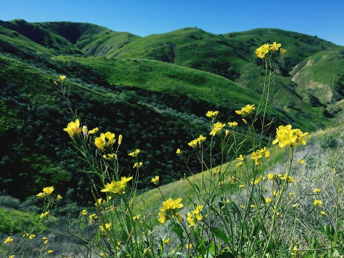 Beauty In Nature Plant Growth Tranquility Tranquil Scene Scenics - Nature 17.62° Landscape Environment Mountain Flower Green Color Flowering Plant Nature Non-urban Scene Yellow